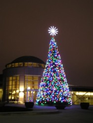 OREGON CASCADE FIR TREE WITH C-7 LED LAMPS