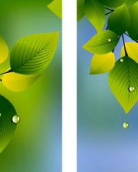SUMMER LEAVES AND RAINDROPS