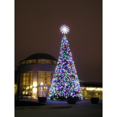 28' OREGON CASCADE FIR TREE WITH C-7 LED LIGHTING