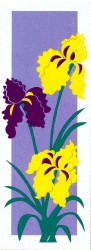 IRIS - PURPLE AND YELLOW