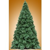 12' NORTHWEST CONIFER TREE