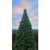 Oregon Cascade Fir tree